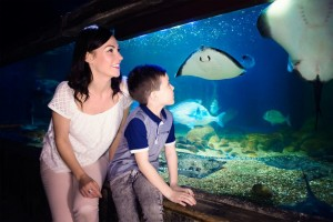 Il Sea Life Roma Aquarium, Parco Centrale del Lago - Roma Eur.